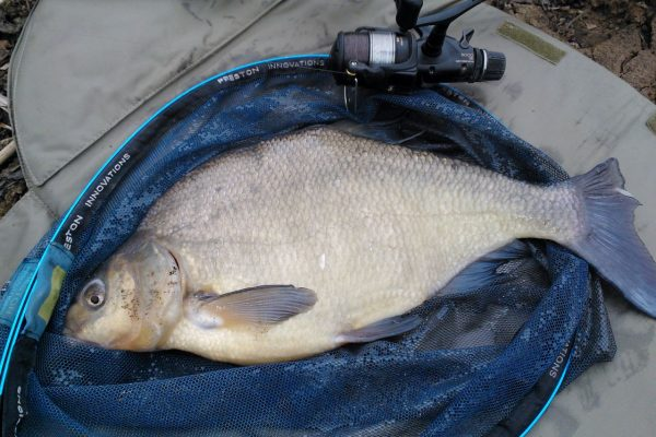 10lb Bream, Fiddleneck, February